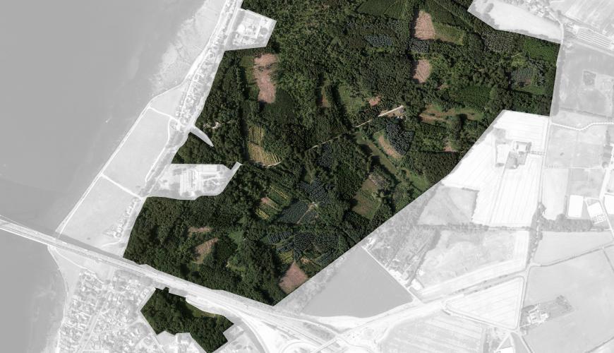 Staurby Skov - forslag